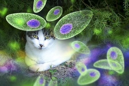 Toxoplasma gondii awareness conceptual image. 3D illustration showing Toxoplasma gondii tachyzoites and the cat which is the definitive host of parasites