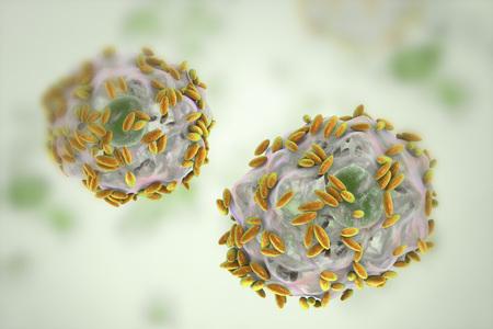 細菌性膣炎の顕微鏡による診断ができます。膣分泌物を含む上皮細胞、いわゆる手掛かり細胞細菌ガルドネレラ膣、3 D イラストレーションで覆われ 写真素材