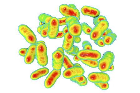 Prevotella bacteria, 3D illustration. Gram-negative anaerobic bacteria that are associated with the onset of rheumatoid arthritis Stock Illustration - 91113266