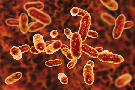 Tannerella forsythia bacteria, 3D illustration. Gram-negative anaerobic bacteria that cause periodontal diseases and have found to be associated with esophageal cancer Banco de Imagens