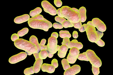 Prevotella bacteria, 3D illustration. Gram-negative anaerobic bacteria, members of oral and vaginal flora, cause anaerobic infections of respiratory tract and other location Stock Illustration - 91139158