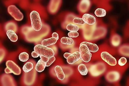 Porphyromonas gingivalis 박테리아, 3D 그림입니다. 치주 질환, 세균성 질증을 유발하는 혐기성 박테리아는 아마도 류마티스 관절염 및 식도암과 관련이 있습