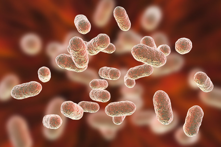 Porphyromonas gingivalis bacteria, 3D illustration. Anaerobic bacteria that cause periodontal disease, bacterial vaginosis, are probably associated with rheumatoid arthritis and esophageal cancer