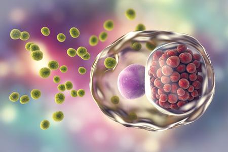 Chlamydia trachomatis 박테리아, 녹색, extracellular 및 망상 시체 빨간색, intracellular를 보여주는 3D 그림