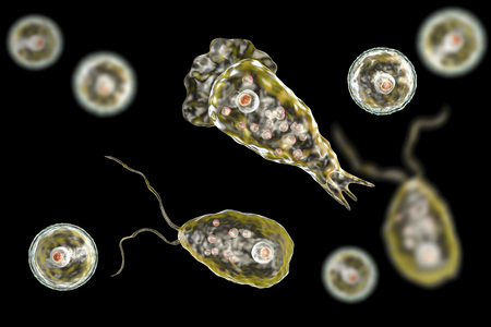 Brain-eating amoeba infection, naegleriasis. Flagellate forms, trophozites and cysts of the parasite Naegleria fowleri, 3D illustration Foto de archivo
