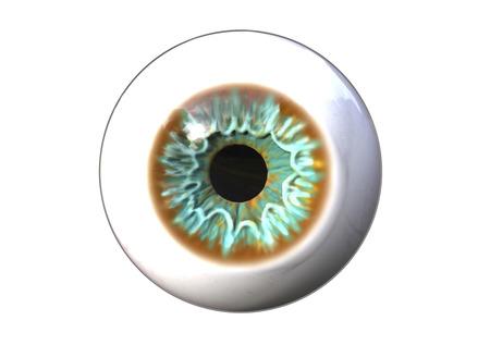 Realistic human eye isolated on white background, 3D illustration Stock Photo