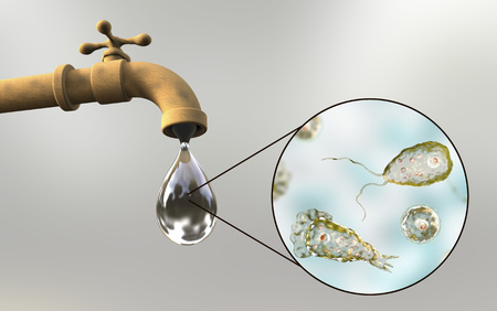 脳を食べるアメーバの意識の概念。鼻洗浄の儀式中に取得感染の潜在的な方法を示す 3 D 図。フォーラーネグレリア Trophozites 汚い水道水で使用でき 写真素材