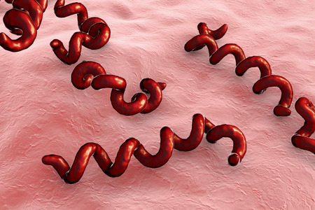 Treponema pallidum on the surface of human skin, bacterium which causes syphilis, sexually transmitted bacterium, close-up view. 3D illustration