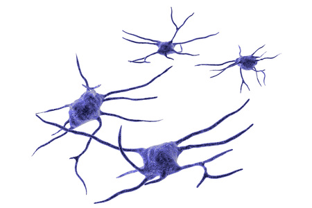 Neuron, brain cell isolated on white background, neural network, 3D illustration. Human nervous system