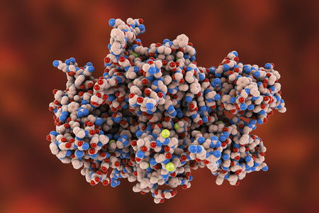 Coagulation Factor VIII, FVIII, an essential blood-clotting protein, also known as anti-hemophilic factor, AHF, 3D illustration. Its defficiency results in hemophilia A Reklamní fotografie