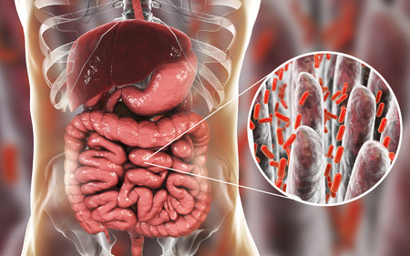 Intestinal microbiome, anatomy of human digestive system and close-up view of intestinal villi with enteric bacteria, 3D illustration