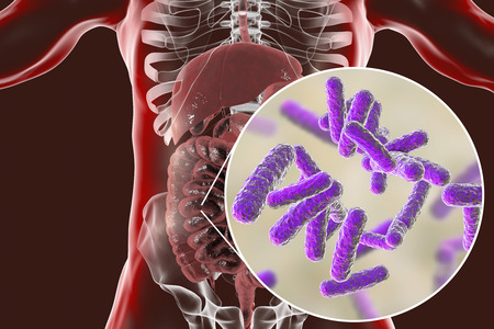 Intestinal microbiome, anatomy of human digestive system and close-up view of enteric bacteria, 3D illustration