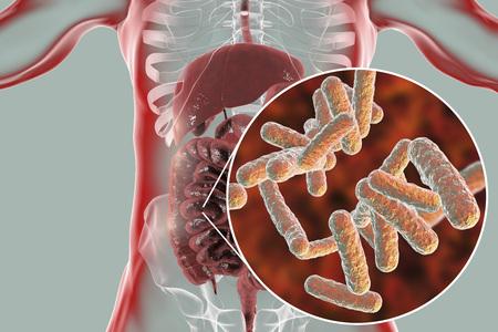 Microbioma intestinal, anatomía del sistema digestivo humano y vista de primer plano de bacterias entéricas, ilustración 3D Foto de archivo