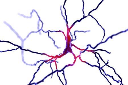 Dopaminergic neuron, computer reconstruction, isolated on white background. Degeneration of this brain cells are responsible for development of Parkinsons disease, 3D illustration