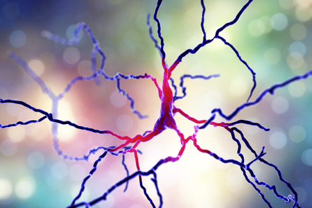 Dopaminergic neuron, computer reconstruction. Degeneration of this brain cells are responsible for development of Parkinsons disease, 3D illustration Stock Photo