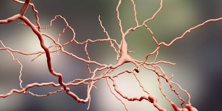 Dopaminergic neuron, computer reconstruction. Degeneration of this brain cells are responsible for development of Parkinsons disease, 3D illustration Banco de Imagens