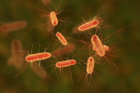 Escherichia coli bacterium, E.coli, gram-negative rod-shaped bacteria, part of intestinal normal flora and causative agent of diarrhea and inflammations of different location, 3D illustration Stock fotó - 96323924