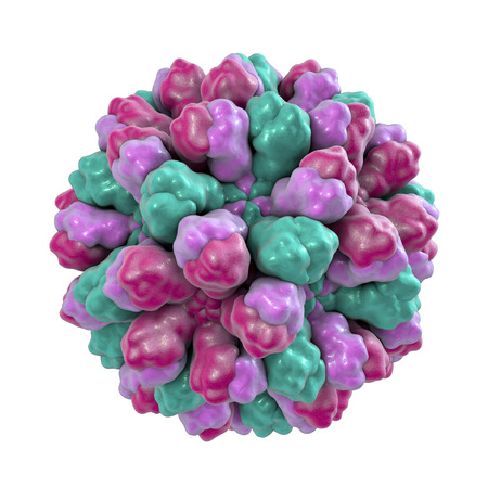 Norovirus, Norwalk virus, also called winter vomiting bug, RNA virus from Caliciviridae family, causative agent of gastroenteritis characterized by diarrhea, vomiting, stomach pain. 3D illustration