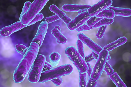 Bacteria Bifidobacterium, gram-positive anaerobic rod-shaped bacteria which are part of normal flora of human intestine are used as probiotics and in yoghurt production. 3D illustration