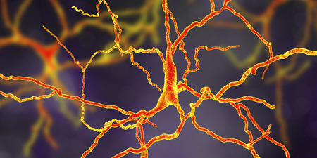 Dopaminergic neuron, computer reconstruction. Dysfunction of this brain cells are responsible for development of Parkinsons disease, autism and schizophrenia, 3D illustration Stock Photo