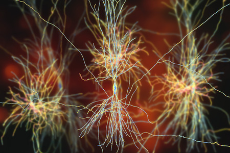 Human hippocampus neurons, computer reconstruction, 3D illustration. Damage of hippocampus is involved in development of Alzheimer's disease, other form of dementia, memory loss, epilepsy, depression Stock Photo