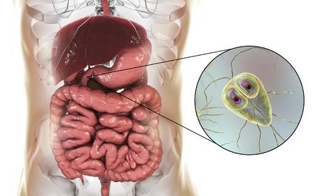 Giardia lamblia protozoan, found in duodenum, close-up view the causative agent of giardiasis, 3D illustration Archivio Fotografico