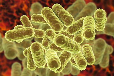 Enterobacter bacteria, gram-negative rod-shaped bacteria, part of normal microbiome of intestine and causative agents of hospital-aquired nosocomial antibiotic-resistant infections, 3D illustration