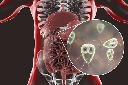 Giardia lamblia protozoan, found in duodenum, close-up view the causative agent of giardiasis, 3D illustration Banco de Imagens