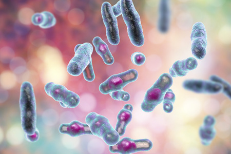 Clostridium perfringens bacteria, anaerobic spore-producing bacteria, the causative agent of gas gangrene infection and food poisoning, 3D illustration