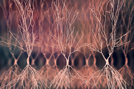 Human hippocampus neurons, computer reconstruction, 3D illustration. Damage of hippocampus is involved in development of Alzheimers disease, other form of dementia, memory loss, epilepsy, depression