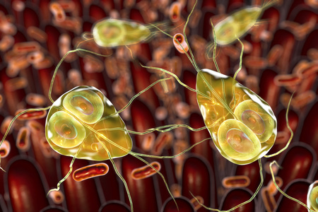 Giardia lamblia protozoan, the causative agent of giardiasis, 3D illustration showing intestinal villi with enteric bacteria and Giardia parasites