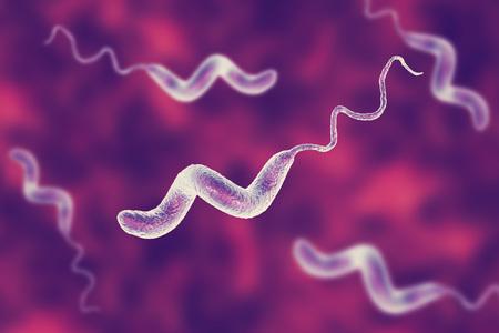 Campylobacter-bacteriën, C. jejuni, C. foetus, gramnegatieve S-vormige beweeglijke bacteriën de veroorzaker van voedselinfectie campylobacteriose, 3D-afbeelding Stockfoto - 97203638