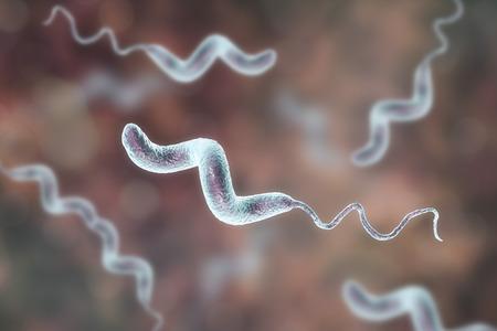 Campylobacter bacteria, C. jejuni, C. fetus, Gram-negative S-shaped motile bacteria the causative agent of food-borne infection campylobacteriosis, 3D illustration Stok Fotoğraf