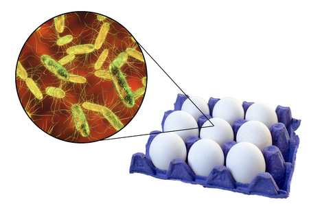 Contamination of eggs with Salmonella bacteria, medical concept for transmission of salmonellosis, 3D illustration Archivio Fotografico