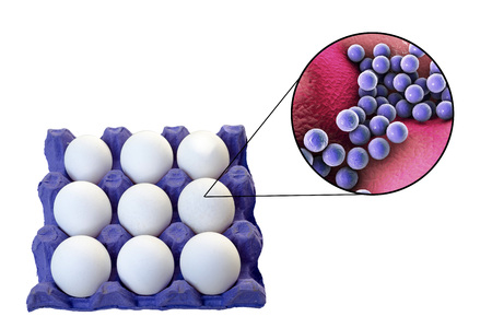 Contamination of eggs with Staphylococcus aureus bacteria, medical concept for transmission of staphylococcal food poisoning, 3D illustration Stock Photo