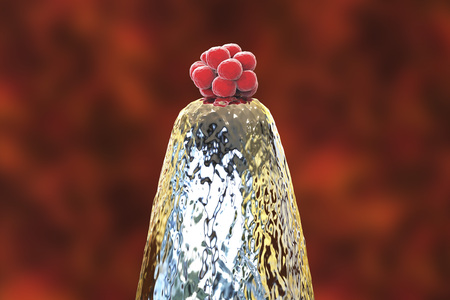 16-cell human embryo on a needle tip, 3D illustration