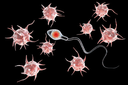 Infertility concept, microbes attacking spermatozoon and preventing it from fertilization, 3D illustration Stock Photo