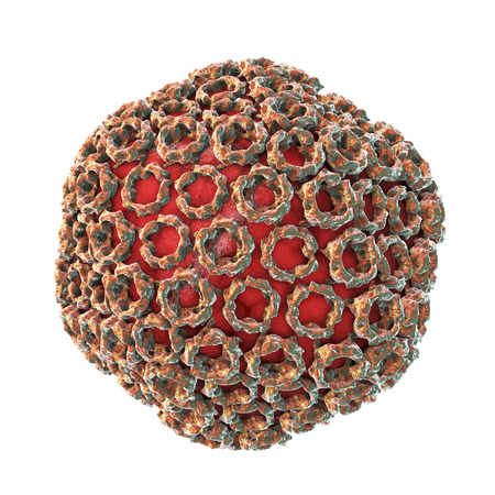 Rift valley fever virus, 3D illustration. An RNA virus of Bunyaviridae family, transmitted from infected animals, by mosquito bite, by air, the causative agent of Rift valley fever Imagens