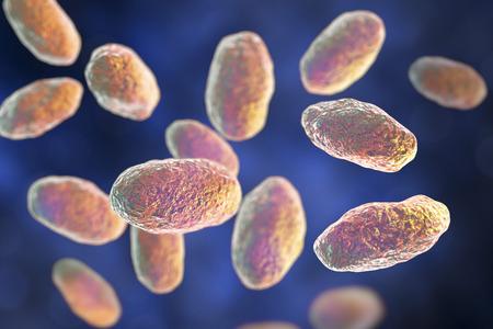 Yersinia pseudotuberculosis bacteria, 3D illustration. Gram-negative bacteria of Enterobacteriaceae family, the causative agent of Yersiniosis, Far East scarlet-like fever Banco de Imagens