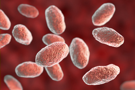 Yersinia pseudotuberculosis bacteria, 3D illustration. Gram-negative bacteria of Enterobacteriaceae family, the causative agent of Yersiniosis, Far East scarlet-like fever Stock Photo