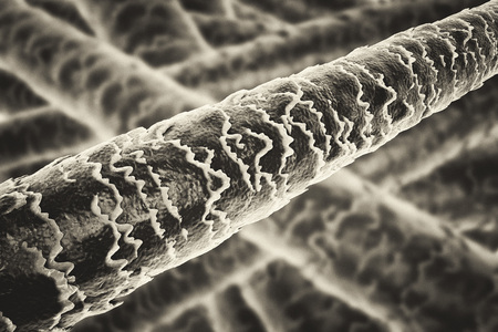 Human hair under microscope, 3D illustration showing close-up structure of healthy human hair. Old-style toning