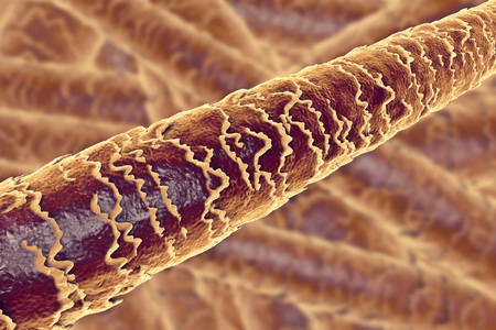 Human hair under microscope, 3D illustration showing close-up structure of healthy human hair