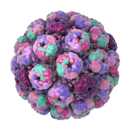Polyomavirus, DNA virus, Papovaviridae family, 3D illustration. Many of them are asymptomatic but some cause cancer, such as Merkel cell polyomavirus, leukoencephalopathy, haemorrhagic cystitis