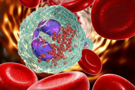 Eosinophil in blood, a white blood cell, 3D illustration. Eosinophils are granulocytes taking part in allergy and asthma, protection against multicellular parasites