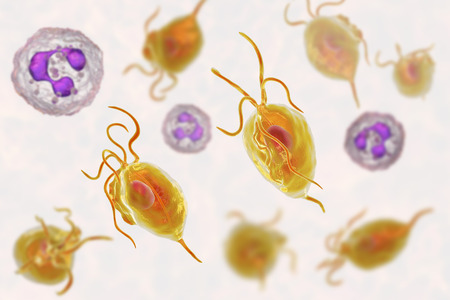 Trichomonas vaginalis protozoan and neutrophils, 3D illustration. The cause of trichomoniasis. Smears from urethra and vagina usually shows Trichomonas together with abundant neutrophils