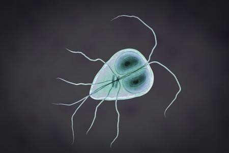 Giardia intestinalis protozoan, formely known as G. lamblia or Lamblia intestinalis, a flagellated parasite that reproduces in the small intestine and causes giardiasis, 3D illustration