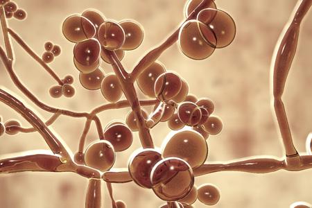 Candida auris fungi, emerging multidrug resistant fungus, 3D illustration Stock Photo