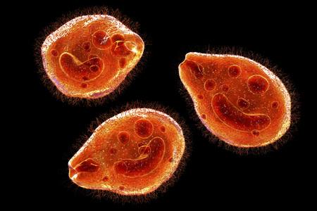 Balantidium coli protozoan, 3D illustration. Ciliated intestinal parasite that causes balantidiasis Stock Photo
