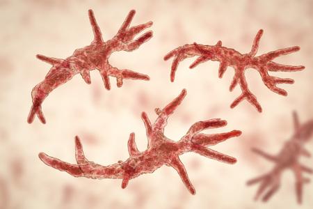 Balamuthia mandrillaris amoeba, 3D illustration. A free-living protozoan in soil and water, can cause granulomatous amoebic encephalitis of the brain Stock Photo