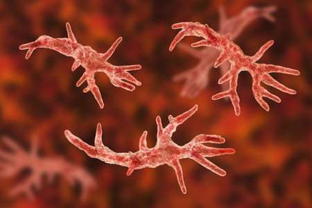 Balamuthia mandrillaris amoeba, 3D illustration. A free-living protozoan in soil and water, can cause granulomatous amoebic encephalitis of the brain